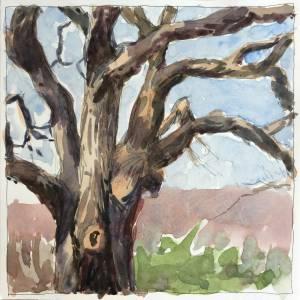 Old Tree | Jeffrey Smith Art