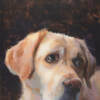 Lab Named Albert, an oil painting of a yellow lab by Minneapolis painter Jeffrey Smith