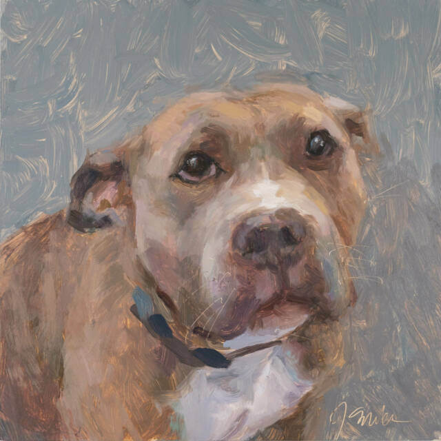 Muade - oil painting of a pitbull by Jeffrey Smith